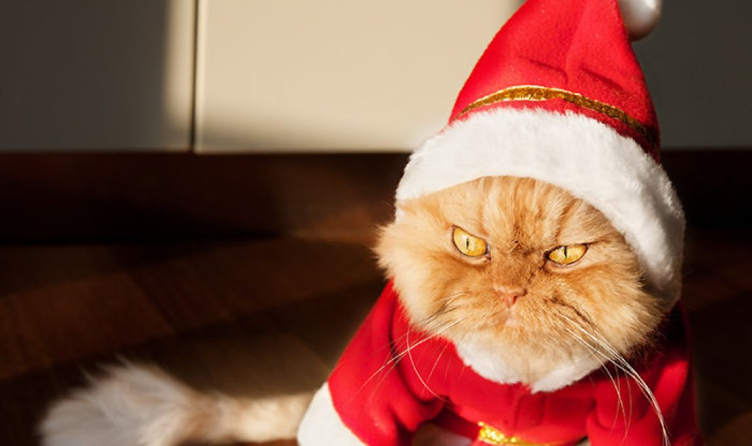 Smile: Χαριτωμένα ζωάκια που λατρεύουν να μισούν τα Χριστούγεννα σε ξεκαρδιστικές καταστάσεις - Κυρίως Φωτογραφία - Gallery - Video