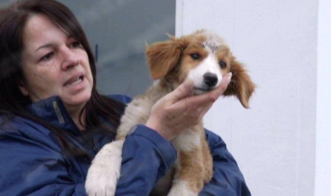 Φρικτός βασανισμός σκύλου στον Πύργο: Ξερίζωσαν ακόμη και τα δόντια από κουταβάκι - Κυρίως Φωτογραφία - Gallery - Video
