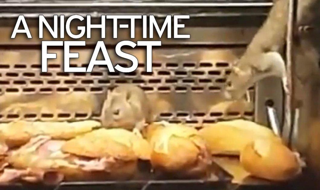 Βίντεο: Ποντίκια έκαναν επιδρομή σε σάντουιτς στη βιτρίνα διάσημης αλυσίδα αρτοποιΐων - Κυρίως Φωτογραφία - Gallery - Video