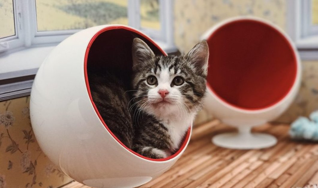 Ποιες Καρντάσιανς; Το «Keeping Up With The Kattarshians», το νέο ριάλιτι με γάτες σπάει τα... ταμεία: Φώτο - Βίντεο  - Κυρίως Φωτογραφία - Gallery - Video