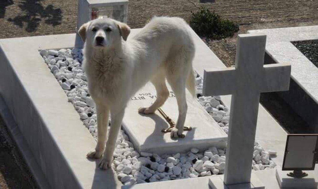 Συγκινητική ιστορία: Σκυλίτσα στην Άρτα περιμένει στο νεκροταφείο το αφεντικό της που πέθανε - Φώτο  - Κυρίως Φωτογραφία - Gallery - Video