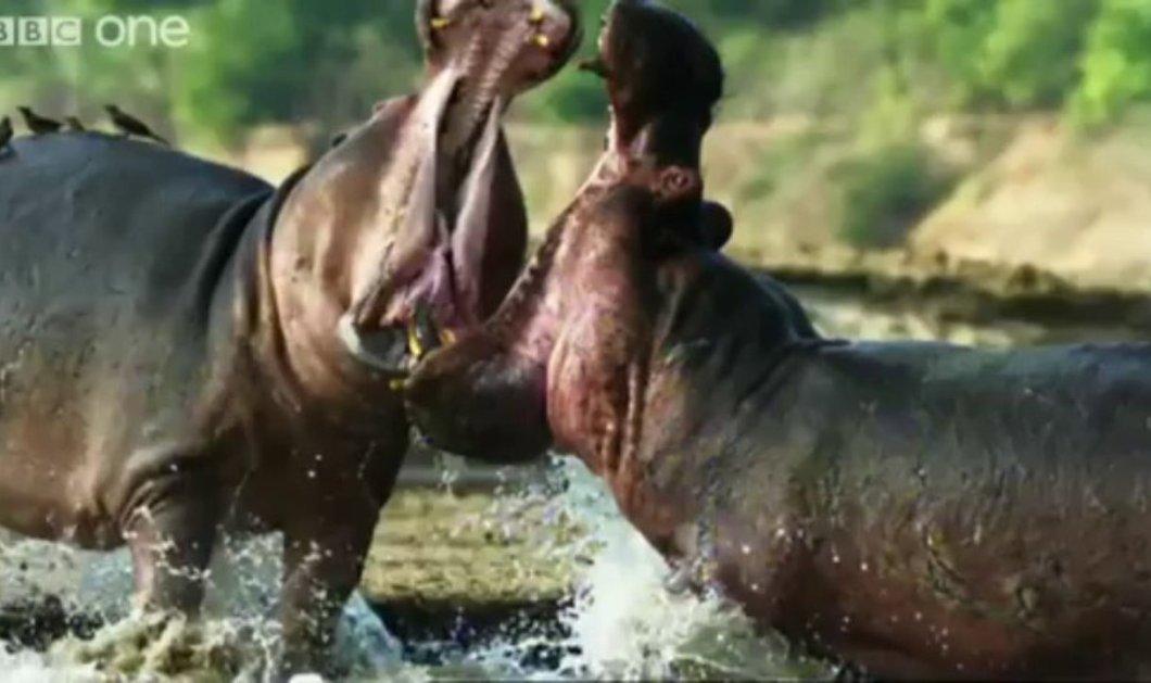 Ένα εξαιρετικό βίντεο 2 λεπτών μας παρουσιάζει την φύση από μια εξαιρετική οπτική γωνία - Κυρίως Φωτογραφία - Gallery - Video