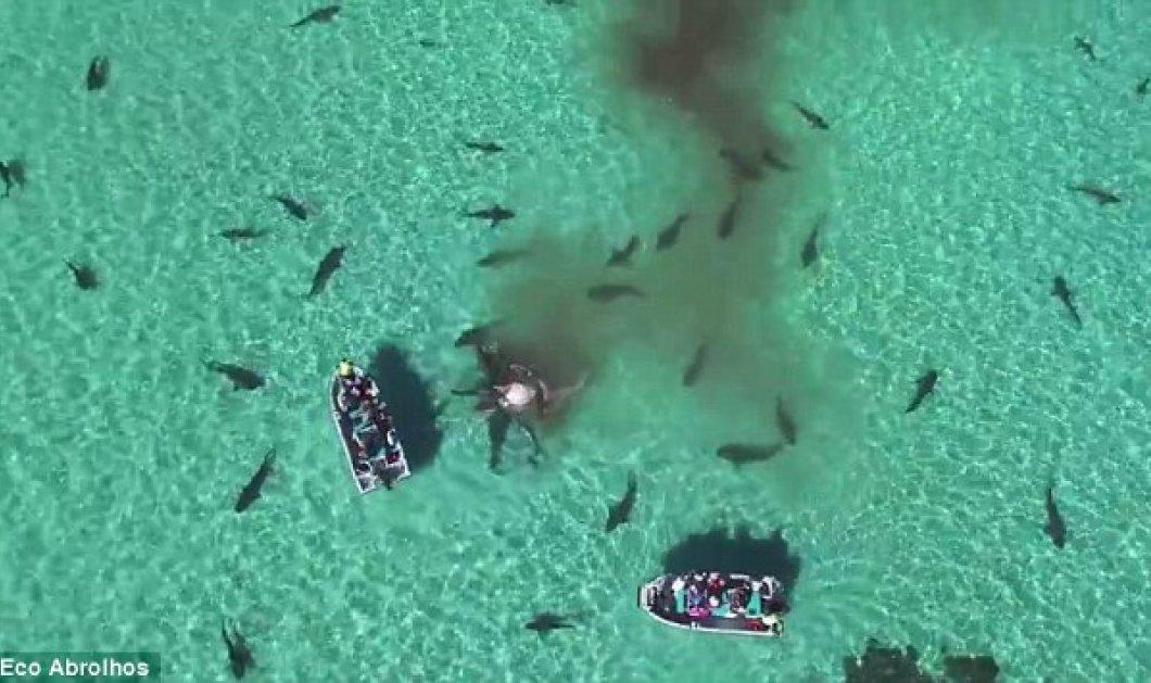 Απίστευτο: Drone απαθανατίζει 70 καρχαρίες να κατασπαράζουν το κουφάρι φάλαινας  - Κυρίως Φωτογραφία - Gallery - Video
