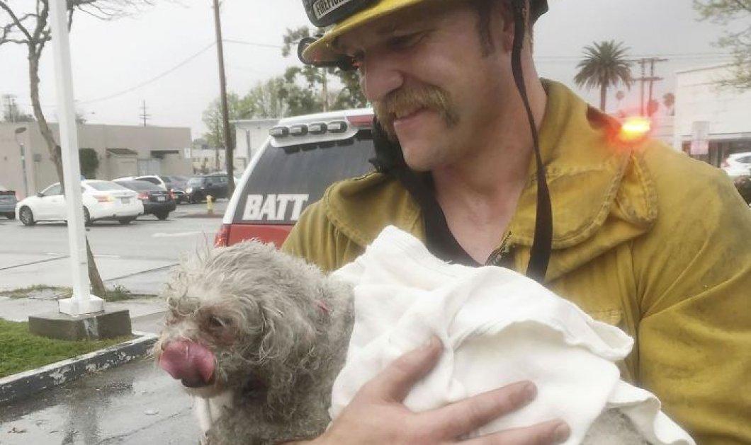 Πυροσβέστης δίνει το φιλί της ζωής σε σκύλο: Τον έσωσε από φλεγόμενο σπίτι - Κυρίως Φωτογραφία - Gallery - Video
