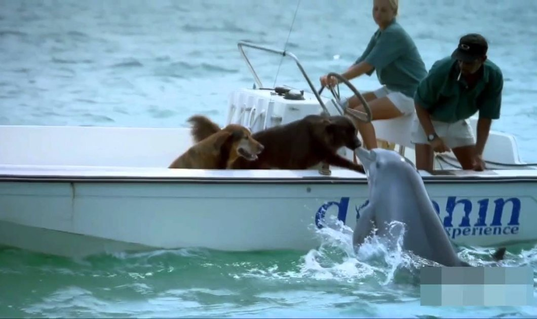 Βίντεο: Η τρυφερή στιγμή που δελφίνι πλησιάζει ένα σκάφος για να φιλήσει σκύλους  - Κυρίως Φωτογραφία - Gallery - Video