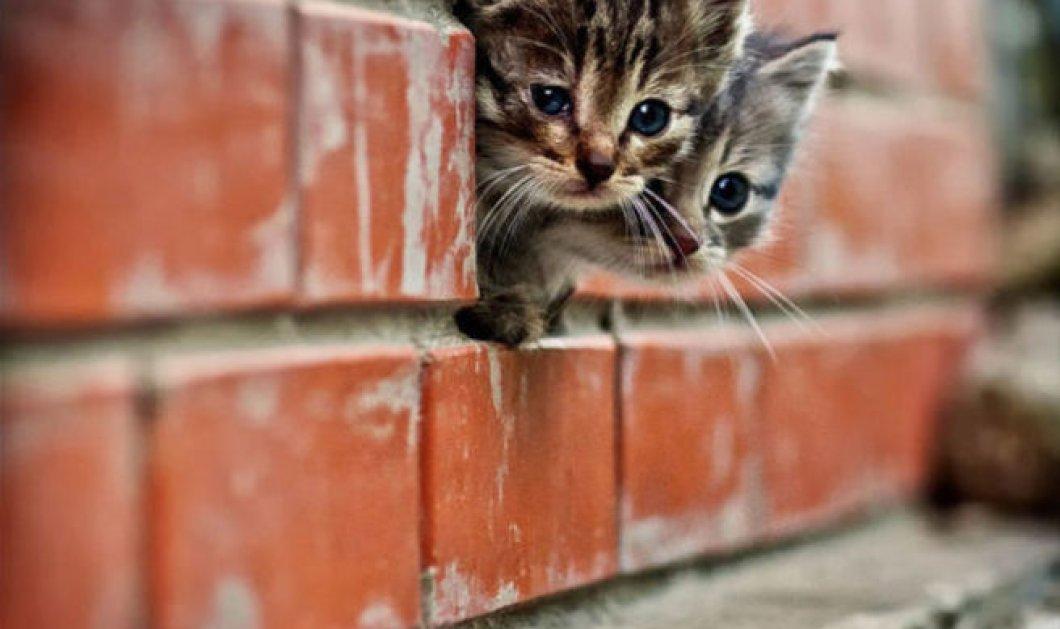 Θρίλερ με ξυρισμένες γάτες ερευνά η αστυνομία στη Βιρτζίνια: Κάποιος τις εξαφανίζει & μετά τις βρίσκουν έτσι - Κυρίως Φωτογραφία - Gallery - Video