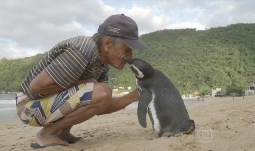 Story of the Day: Ένας πιγκουίνος ταξιδεύει κάθε χρόνο 5.000 μίλια για να ξαναδεί τον ψαρά που τον έσωσε (Φωτό - Βίντεο) - Κυρίως Φωτογραφία - Gallery - Video