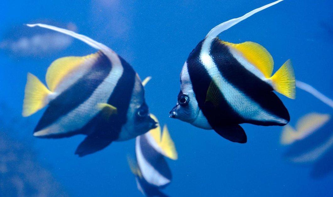 Τα ψάρια έχουν συναισθήματα και μάλιστα κάνουν φιλίες μέσα στον βυθό - Η έρευνα ανατροπή όσων ξέραμε  - Κυρίως Φωτογραφία - Gallery - Video