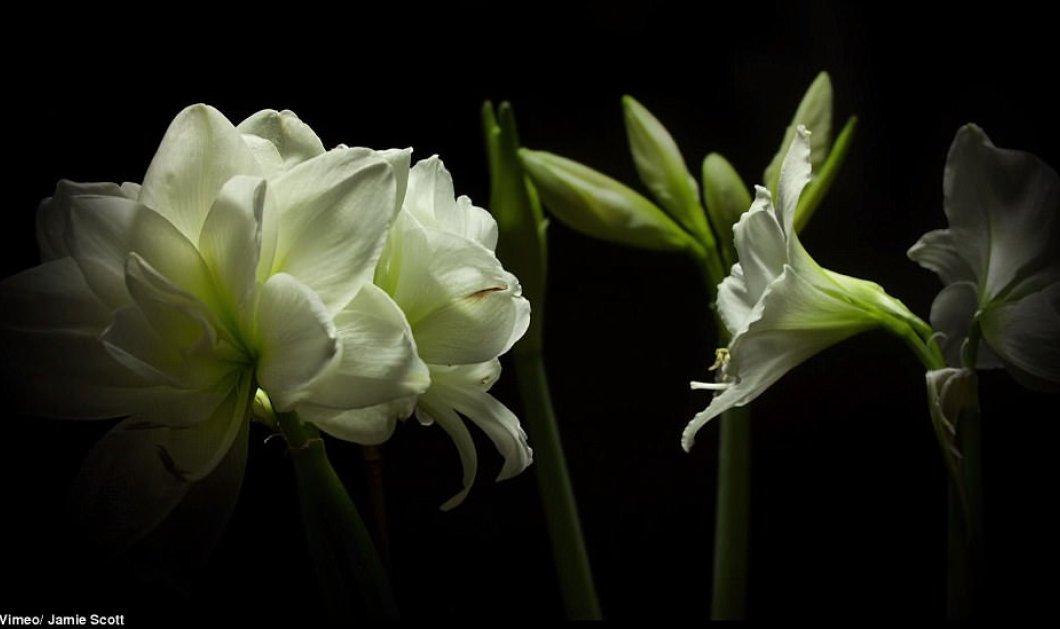 Λουλούδια ανθίζουν σε ένα υπέροχο βίντεο! - Κυρίως Φωτογραφία - Gallery - Video