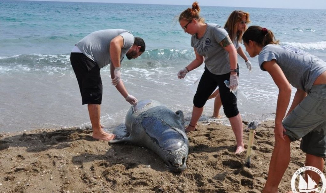 Σάμος: Ποιος σκότωσε την Αργυρώ τη φώκια με καραμπίνα - Έγκλημα σπάνιου θαλάσσιου θηλαστικού - Κυρίως Φωτογραφία - Gallery - Video