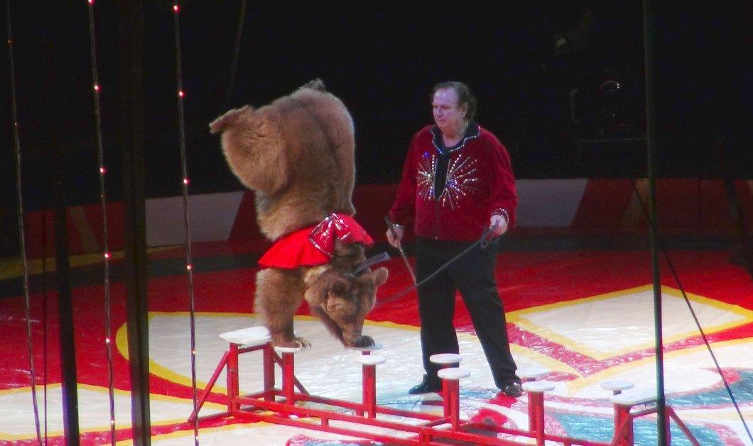 Βίντεο- Τεράστια αρκούδα εκνευρίστηκε στη σκηνή τσίρκου & έπεσε στο κοινό τραυματίζοντας μικρούς & μεγάλους - Κυρίως Φωτογραφία - Gallery - Video