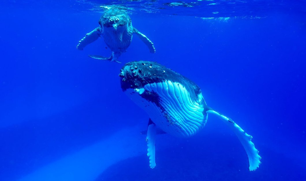 Ονειρικά πορτρέτα δελφινιών & φαλαινών από τα βάθη της θάλασσας - Κυρίως Φωτογραφία - Gallery - Video
