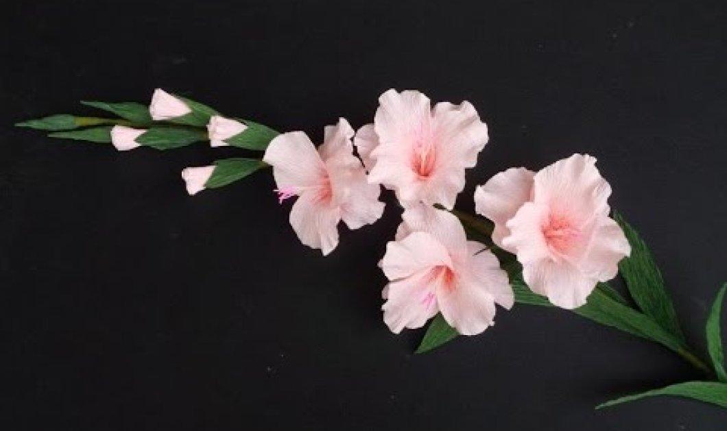 Κάθε μήνας έχει το δικό του άνθος: Το δικό σας ποιο λουλούδι είναι; Γλαδιόλα για τους λέοντες του Αυγούστου - Κυρίως Φωτογραφία - Gallery - Video