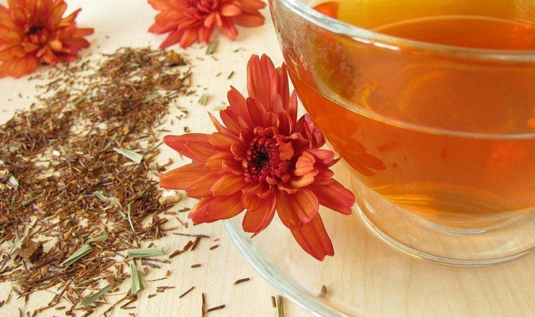 Τσάι κόκκινο Rooibos: Tο βότανο της Νότιας Αφρικής με 10 αντιοξειδωτικά - Ευεργετικό χωρίς καφεΐνη - Κυρίως Φωτογραφία - Gallery - Video