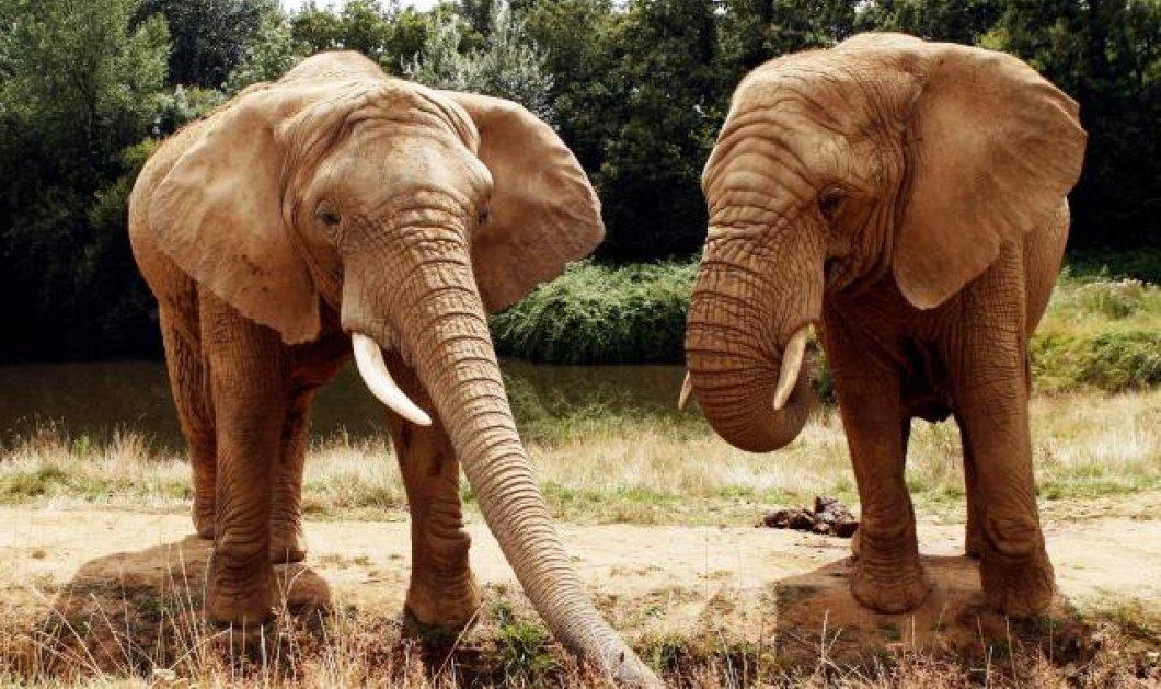 Καταπληκτικό: 7.500 άγρια ζώα πάνε σε πάρκο που ερήμωσε: Πρώτα 900 αντιλόπες, 200 ζέβρες, 100 καμηλοπαρδάλεις, 50 ελέφαντες - Κυρίως Φωτογραφία - Gallery - Video