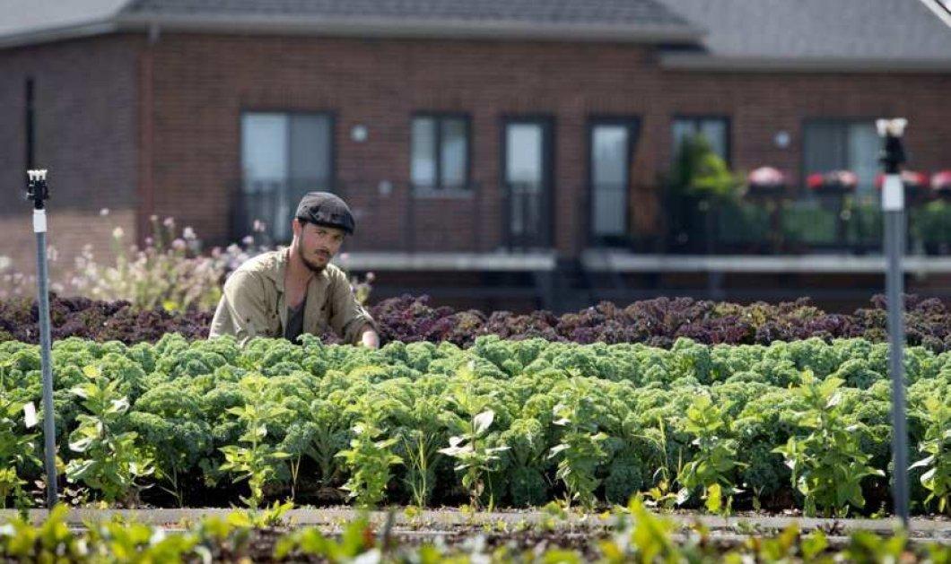 Σουπερμάρκετ στον Καναδά φύτεψε την ταράτσα του & παράγει τα δικά του λαχανικά - (ΦΩΤΟ-ΒΙΝΤΕΟ) - Κυρίως Φωτογραφία - Gallery - Video