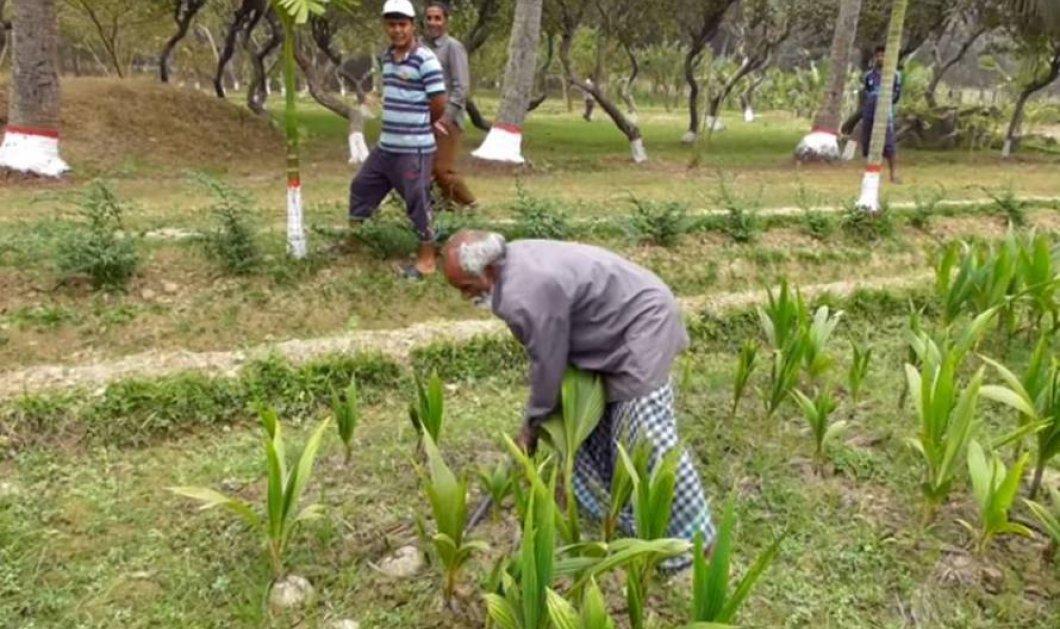 Ένας φτωχός άνθρωπος στο Μπαγκλαντές φυτεύει ένα δέντρο κάθε μέρα! - Κυρίως Φωτογραφία - Gallery - Video
