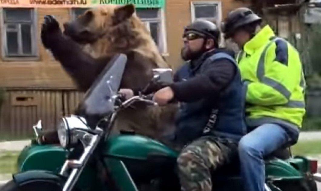 Απίστευτο! Αρκούδα πάνω σε μοτοσυκλέτα κάνει βόλτα (ΒΙΝΤΕΟ) - Κυρίως Φωτογραφία - Gallery - Video