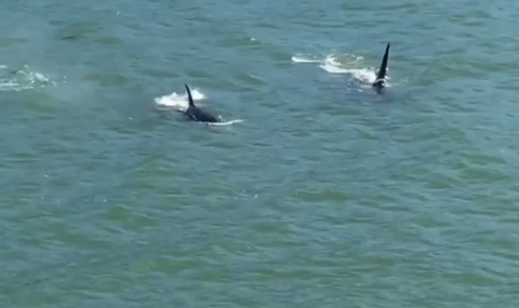 Θρίλερ - Φάλαινες δολοφόνοι: Τι συνέβη όταν δυο λουόμενοι ήρθαν πρόσωπο με πρόσωπο με τις τρεις όρκες (ΒΙΝΤΕΟ) - Κυρίως Φωτογραφία - Gallery - Video