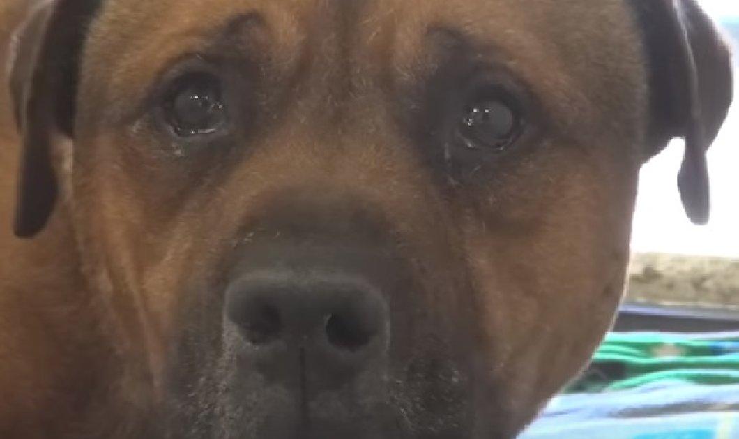 Συγκινητικό βίντεο: Σκύλος δεν σταματάει να κλαίει όταν καταλαβαίνει ότι έχει εγκαταλειφθεί  - Κυρίως Φωτογραφία - Gallery - Video