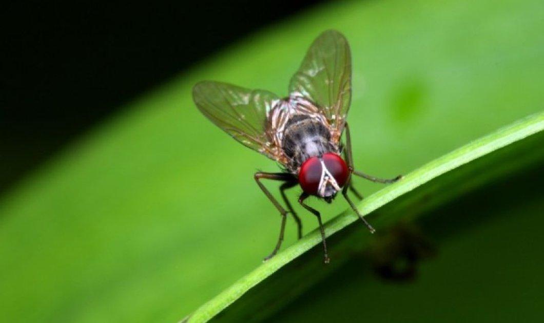 4 φυσικοί τρόποι για να απαλλαγείς από τις μύγες - Κυρίως Φωτογραφία - Gallery - Video