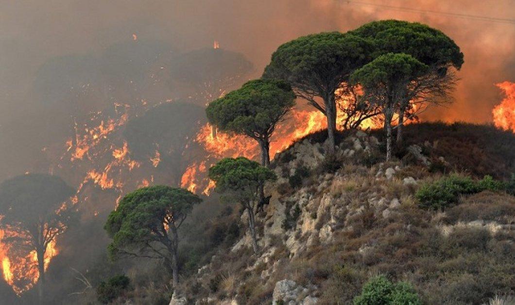 Απίστευτο: Εθελοντές πυροσβέστες έβαζαν φωτιές για να πληρώνονται να τις σβήσουν - Κυρίως Φωτογραφία - Gallery - Video