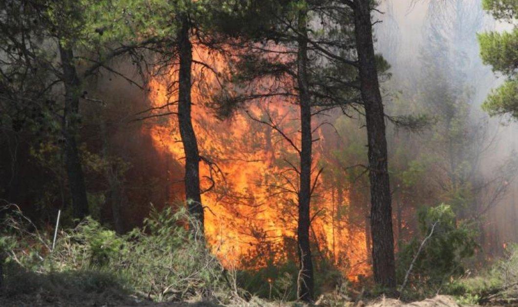 Τρίτη μέρα συνεχίζεται η μάχη στα μέτωπα της φωτιάς: Προς την εθνική οδό η πυρκαγιά - Εκκένωση του χωριού Περιστέρι στην Ηλεία - Κυρίως Φωτογραφία - Gallery - Video