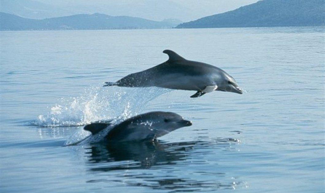 Γεμάτο με πλαστικά απορρίμματα ήταν το στομάχι νεκρών δελφινιών - Κυρίως Φωτογραφία - Gallery - Video
