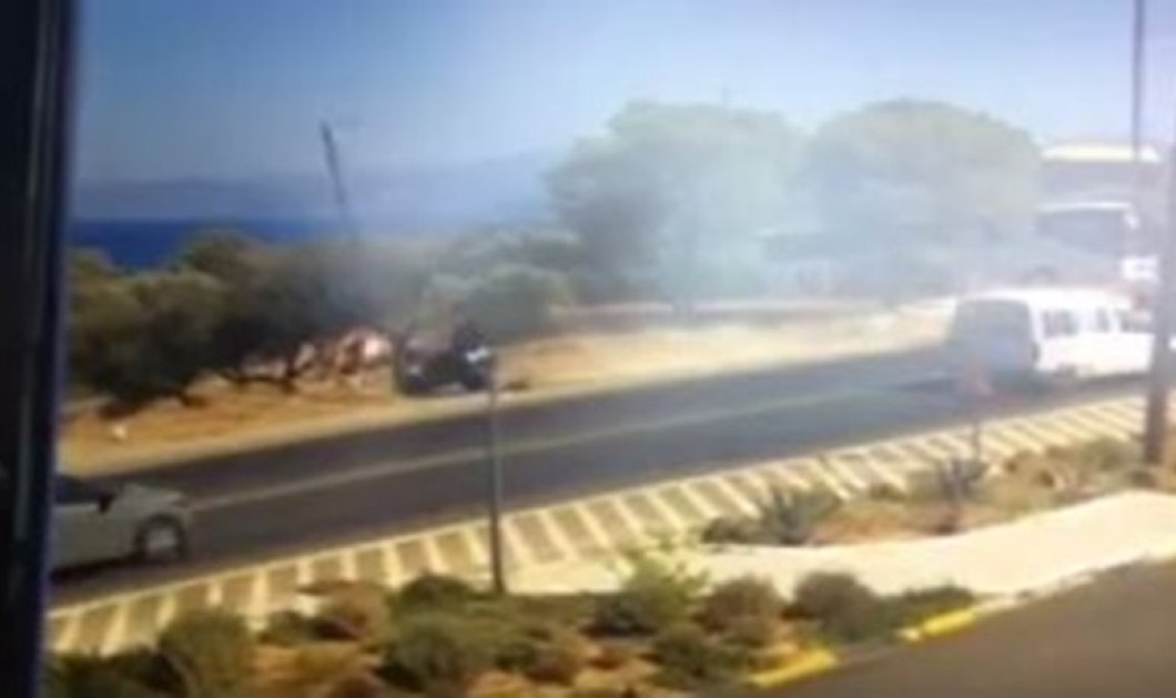 Κρήτη: Γουρούνα «καρφώθηκε» σε στύλο (ΒΙΝΤΕΟ) - Κυρίως Φωτογραφία - Gallery - Video
