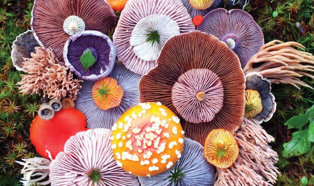 Μοναδικά πολύχρωμα μανιτάρια μοιάζουν με πίνακες ζωγραφικής (ΦΩΤΟ) - Κυρίως Φωτογραφία - Gallery - Video