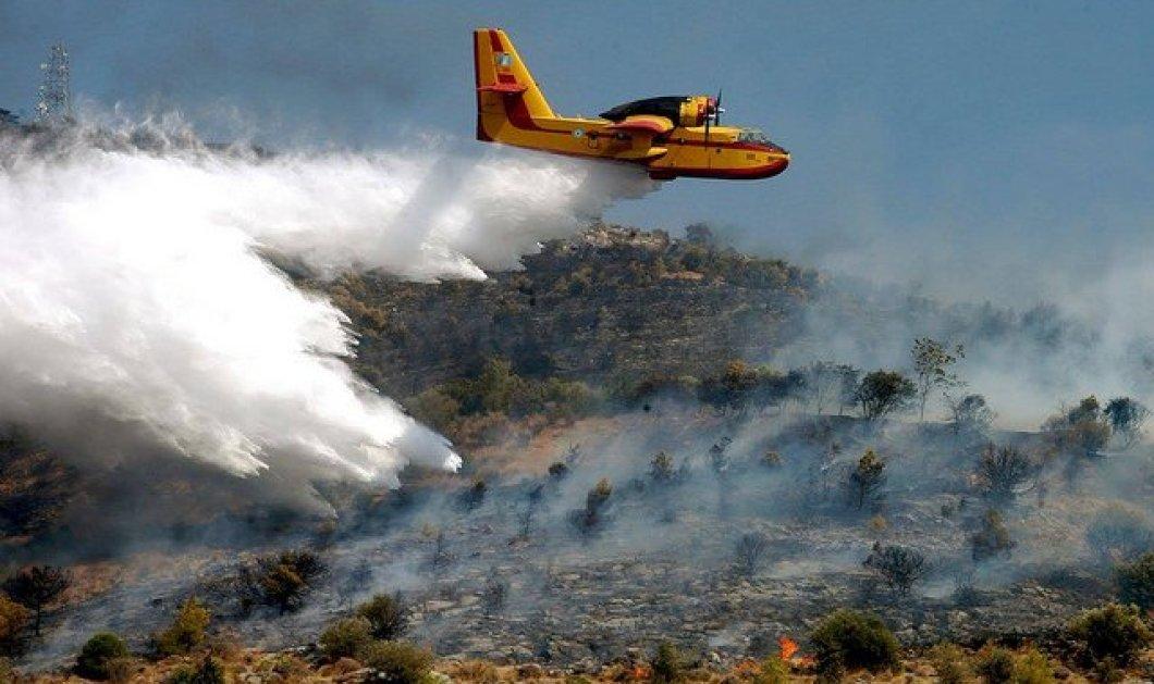 43 φωτιές το τελευταίο 24ωρο - Υψηλός κίνδυνος πυρκαγιάς και σήμερα - Κυρίως Φωτογραφία - Gallery - Video