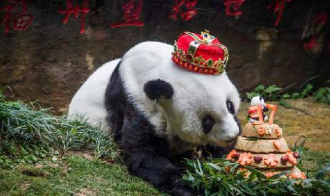 Πέθανε η Μπάσι, το γηραιότερο πάντα του κόσμου - η 37χρονη μασκότ των Ασιατικών Αγώνων του Πεκίνου πάει σε Μουσείο φωτό – βίντεο - Κυρίως Φωτογραφία - Gallery - Video