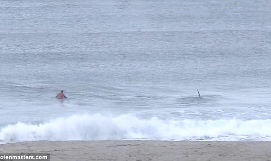 Βίντεο: Φάλαινες δολοφόνοι προκαλούν τον πανικό σε διαγωνισμό surfing - Κυρίως Φωτογραφία - Gallery - Video