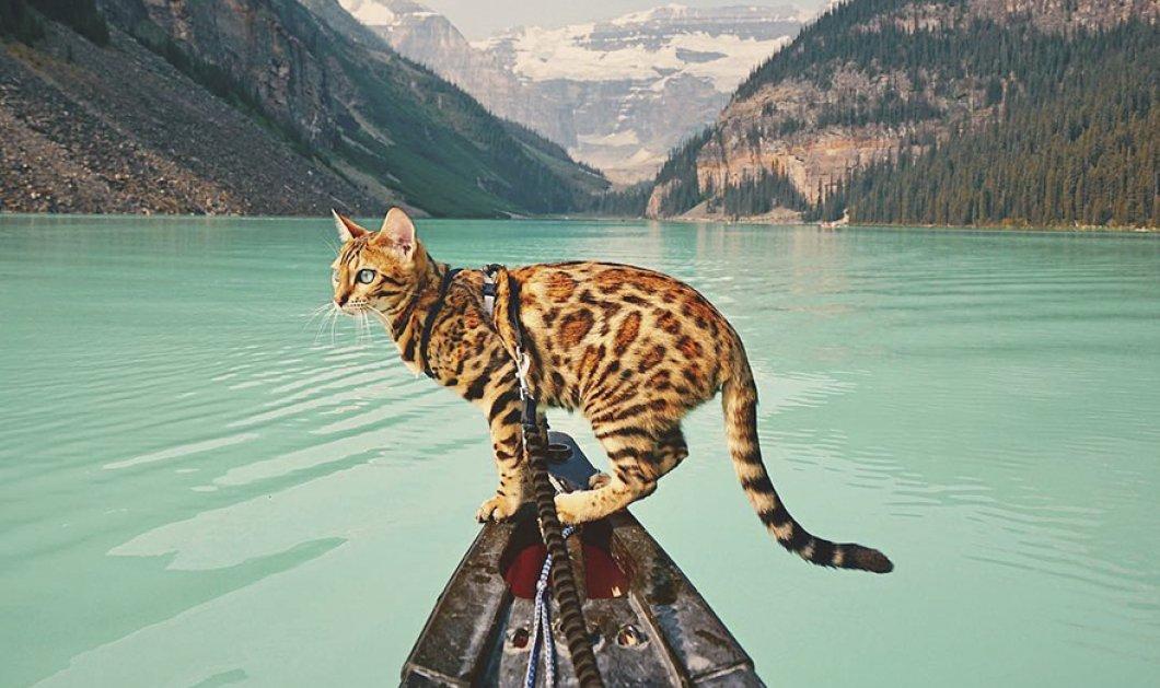 Αυτή η γάτα ζει πολύ καλύτερη ζωή από εσάς και οι φανταστικές φωτογραφίες από τα ταξίδια της το αποδεικνύουν - Κυρίως Φωτογραφία - Gallery - Video