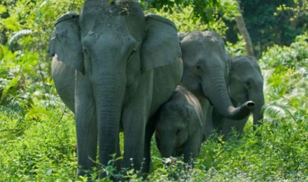 Βίντεο: o εξαγριωμένος ελέφαντας ποδοπατά & σκοτώνει τον μεθυσμένο άνδρα - ήθελε selfie μαζί του - Κυρίως Φωτογραφία - Gallery - Video