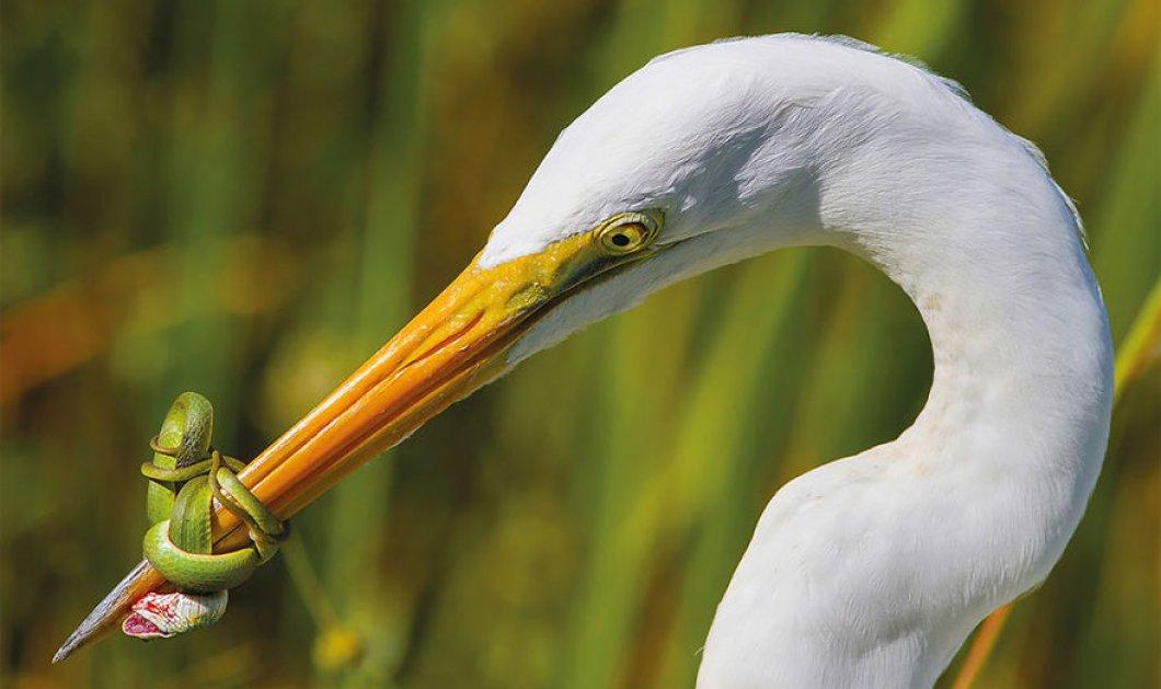 10+ φωτογραφίες με τις ωραιότερες στιγμές των πουλιών σε όλο τον κόσμο από τον διαγωνισμό 2017 - Κυρίως Φωτογραφία - Gallery - Video