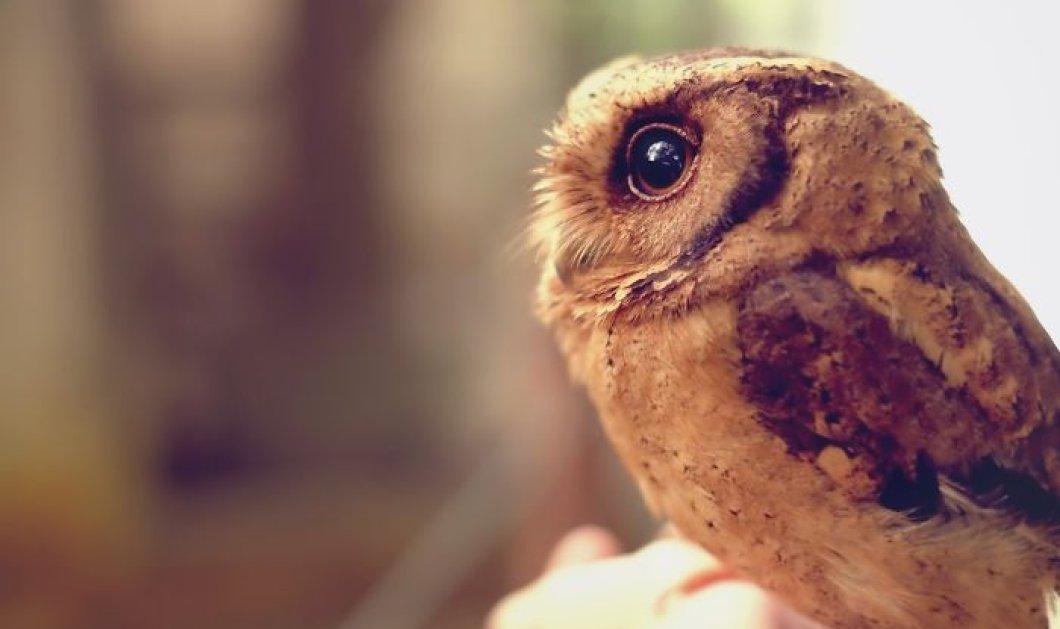 Έχετε κοιτάξει μια κουκουβάγια στα μάτια; Αυτή η φωτογράφος το έκανε και να το υπνωτιστικό αποτέλεσμα - Κυρίως Φωτογραφία - Gallery - Video