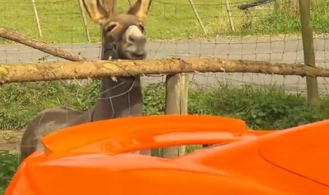 Ο γάιδαρος που επιχείρησε να φάει την «καροτί» McLaren γιατί την πέρασε για καρότο (ΒΙΝΤΕΟ) - Κυρίως Φωτογραφία - Gallery - Video