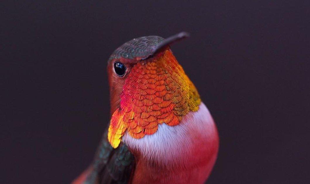Έγινε φίλη με 250 πολύχρωμα πανέμορφα κολιμπρί που τρώνε ακατάπαυστα στο παράθυρο της (ΒΙΝΤΕΟ) - Κυρίως Φωτογραφία - Gallery - Video