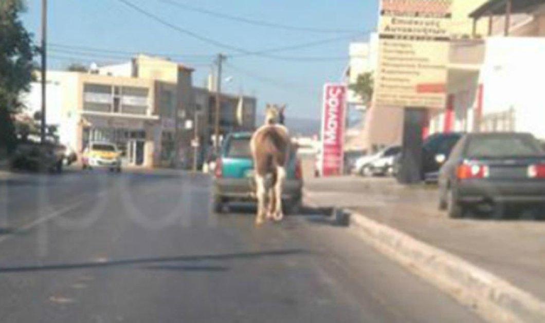 Χανιά: ο οδηγός έδεσε το άλογο του στον κοτσαδόρο του αυτοκινήτου και βγήκε βόλτα στον δρόμο – φωτό - Κυρίως Φωτογραφία - Gallery - Video
