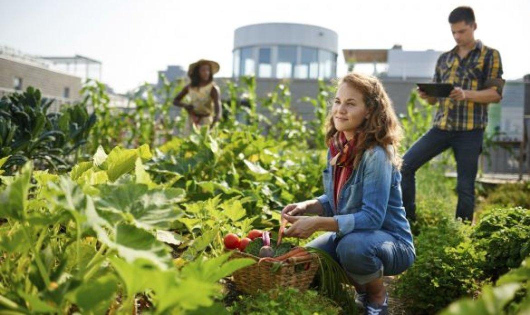«Οικοτεχνία στον Αγροδιατροφικό τομέα»: Νέο εκπαιδευτικό πρόγραμμα από την «Εξέλιξη» στην Αθήνα στις 22 Σεπτεμβρίου - Κυρίως Φωτογραφία - Gallery - Video