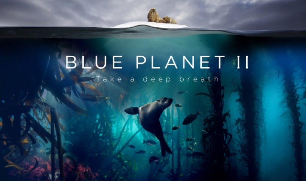 Blue Planet II: το πολυαναμενόμενο ντοκιμαντέρ του BBC Earth κάνει πρεμιέρα αποκλειστικά στην COSMOTE TV  - Κυρίως Φωτογραφία - Gallery - Video