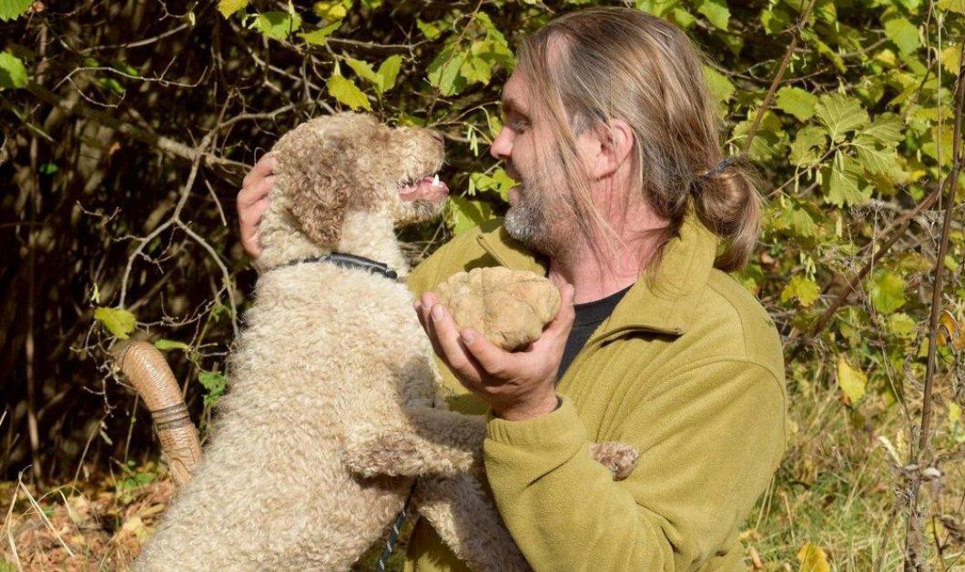 Βρέθηκε η μεγαλύτερη λεύκη τρούφα στην Ελλάδα - ο σκυλάκος Brio ανακάλυψε & ζυγίζει 510 γραμμάρια  - Κυρίως Φωτογραφία - Gallery - Video