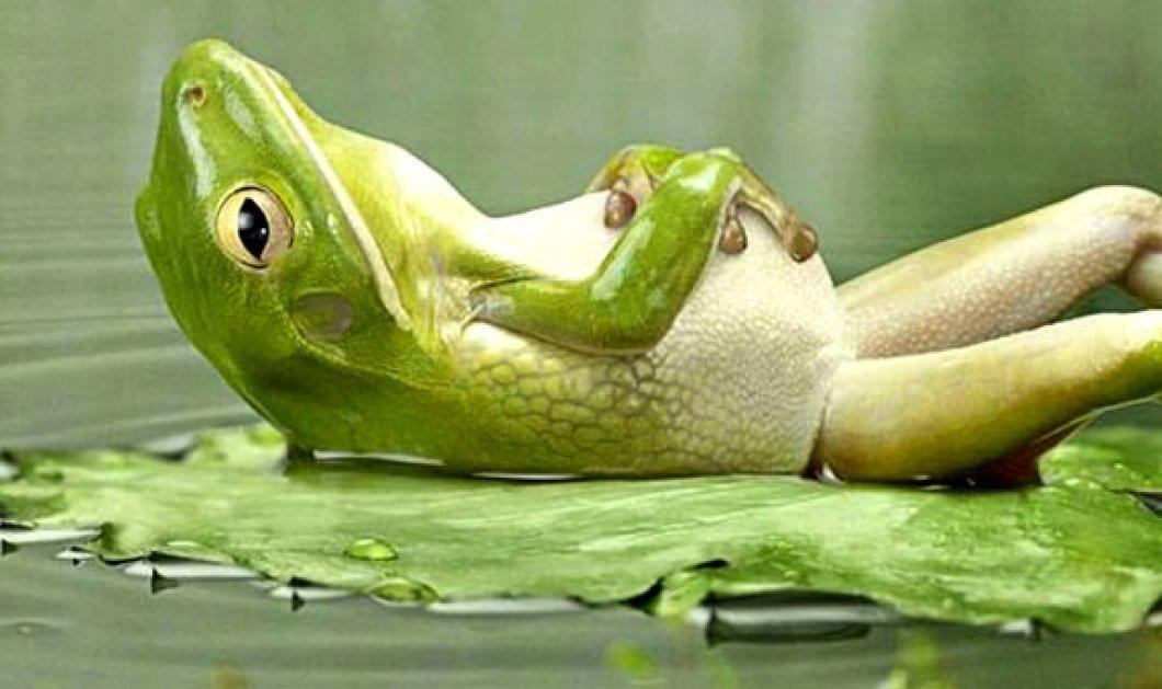 Συναρπαστική φωτογραφία: Φίδι γίνεται μια χαψιά από βάτραχο & φαίνεται σαν να φωνάζει «βοήθεια» - Κυρίως Φωτογραφία - Gallery - Video