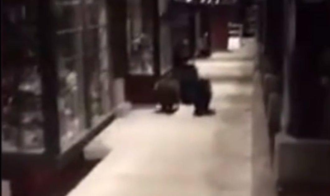 Βίντεο: Η στιγμή που ο Σερίφης κυνηγάει αρκούδες σε κεντρικό δρόμο στην Καλιφόρνια  - Κυρίως Φωτογραφία - Gallery - Video