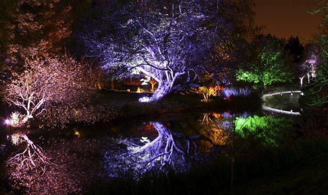 Το μαγικό δάσος των Χριστουγέννων στο Λονδίνο φωτίστηκε πάλι και μοιάζει με παραμύθι - Δείτε ΦΩΤΟ - Κυρίως Φωτογραφία - Gallery - Video