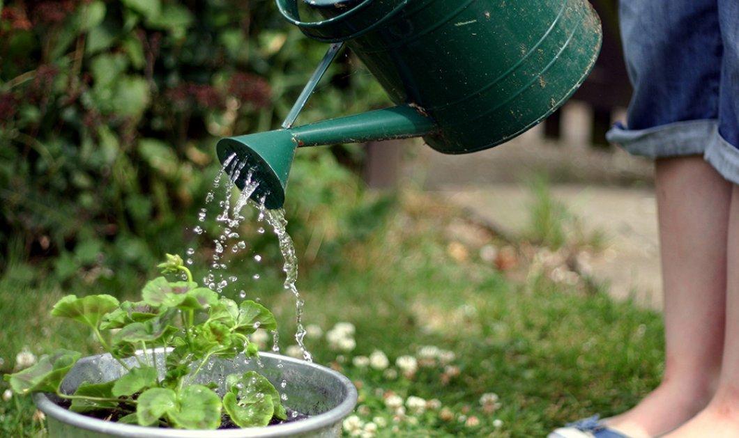 Ηλεκτρονικοί αισθητήρες σας θυμίζουν να ποτίσετε τα φυτά - Κυρίως Φωτογραφία - Gallery - Video