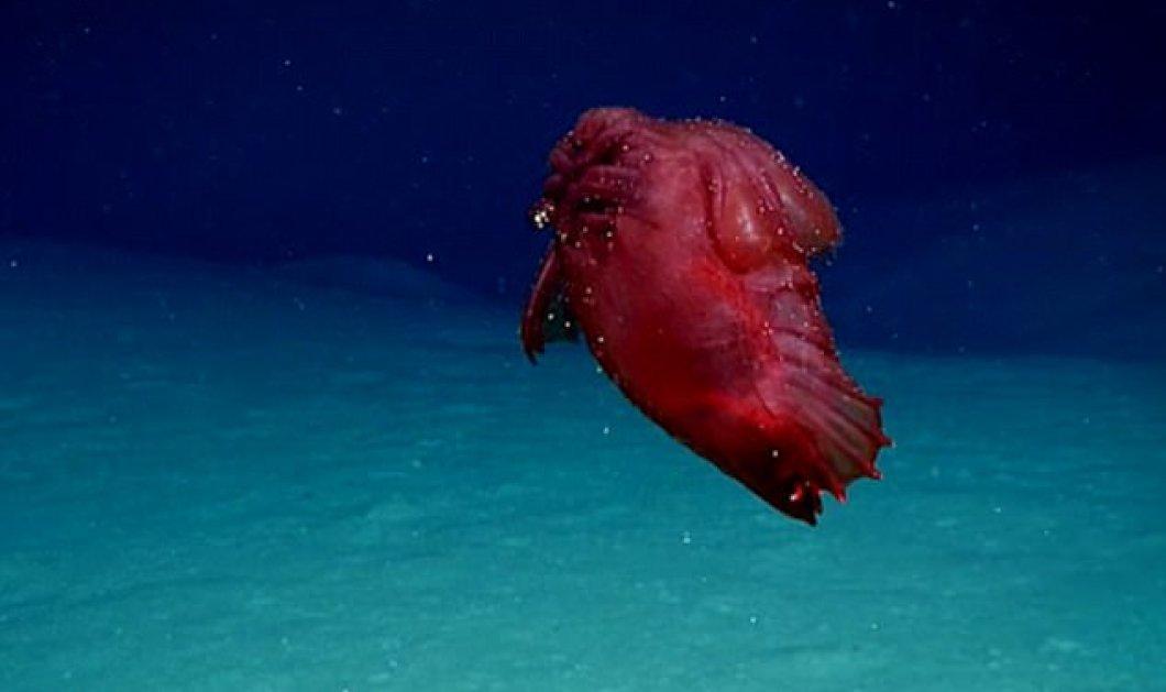 Βίντεο: Εξωτικά θαλάσσια πλάσματα ανακάλυψε η NOAA στον Κόλπο του Μεξικού   - Κυρίως Φωτογραφία - Gallery - Video