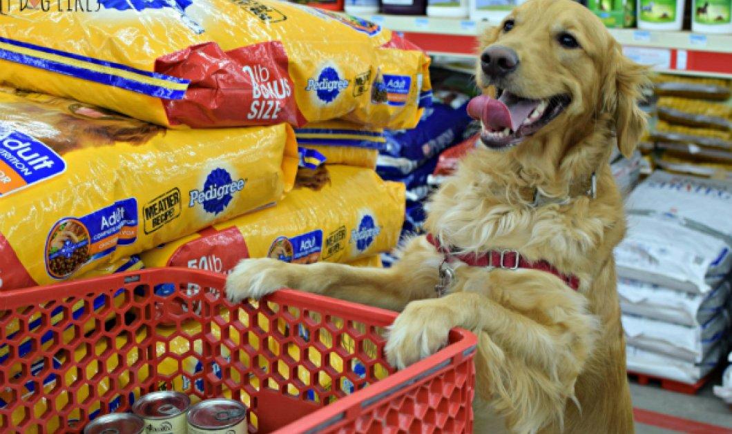 Βίντεο: Μόνο καφέ δεν φτιάχνει αυτός ο γλυκούλης - Υπέροχος σκυλάκος ψωνίζει στο σούπερ μάρκετ και... πληρώνει στο ταμείο! - Κυρίως Φωτογραφία - Gallery - Video