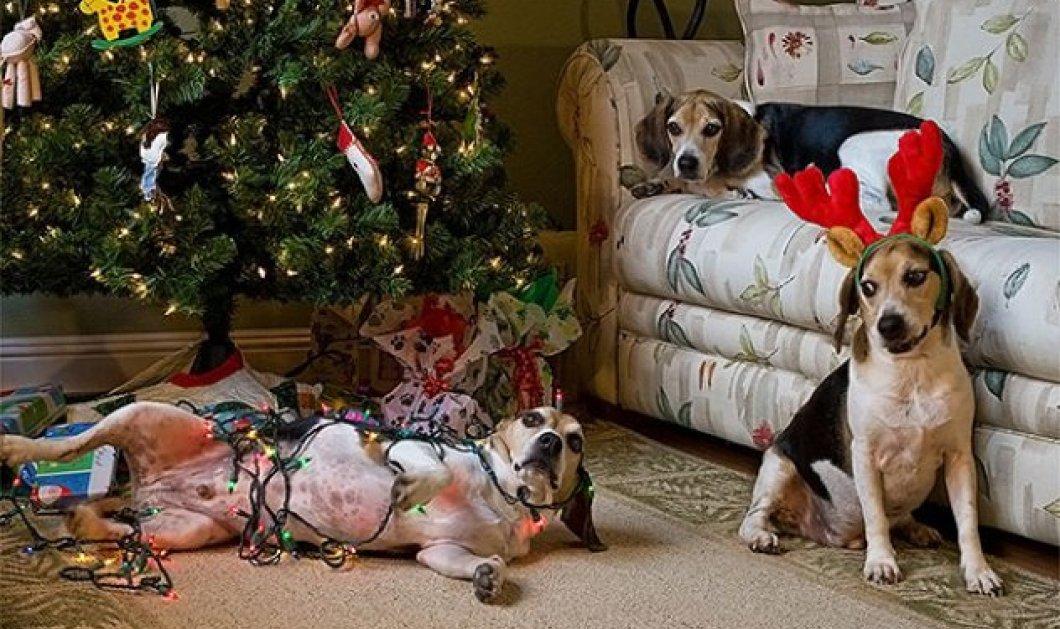Smile: Πως να τα μαλώσεις; 14 σκυλάκια & γατάκια που τα έκαναν μαντάρα τα Χριστουγεννιάτικα δέντρα! (slideshow) - Κυρίως Φωτογραφία - Gallery - Video